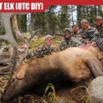How to HUNT ELK (DIY Public Land Bull)