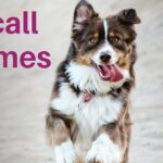 Play those 5 games and improve your dogs recall